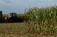 رینگ محصولات کشاورزی جان تازه ای گرفت