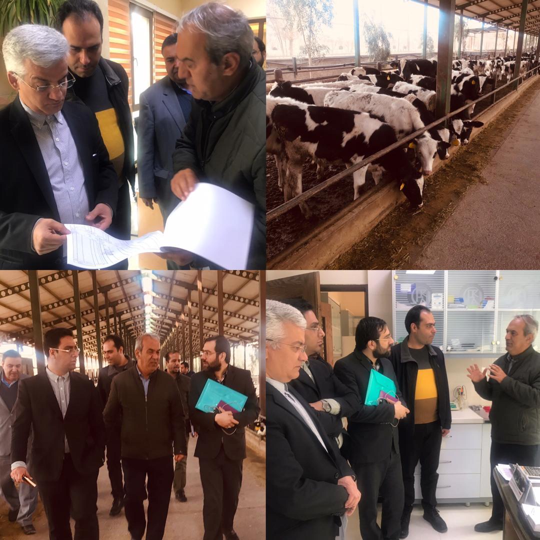صادرات اولین محموله ژنتیکی کشور به جمهوری آذربایجان